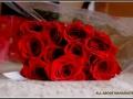 maharahstra-flower-1