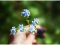 blue-flower-kaas