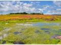 landscape-water-kaas